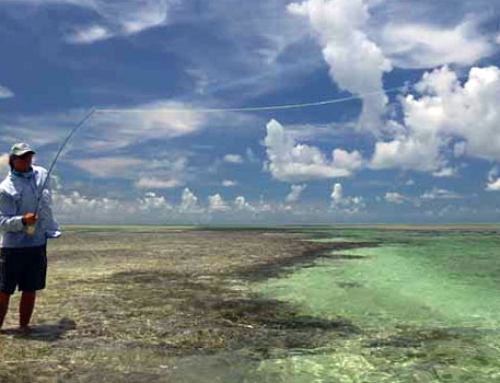 October key west flats fishing report wading for permit for Key west flats fishing