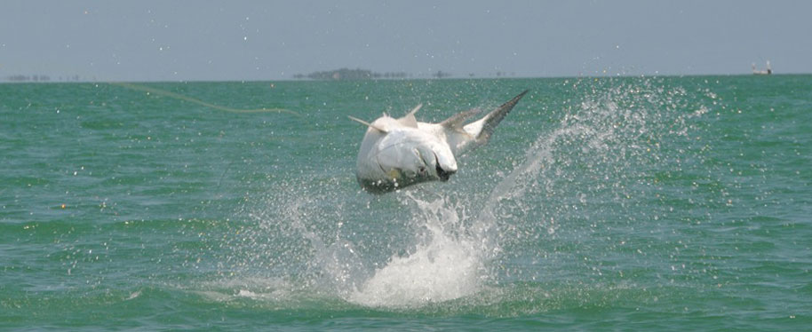 tarpon fishing in key west with a fly rod