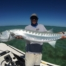 Big Florida Keys Barracuda